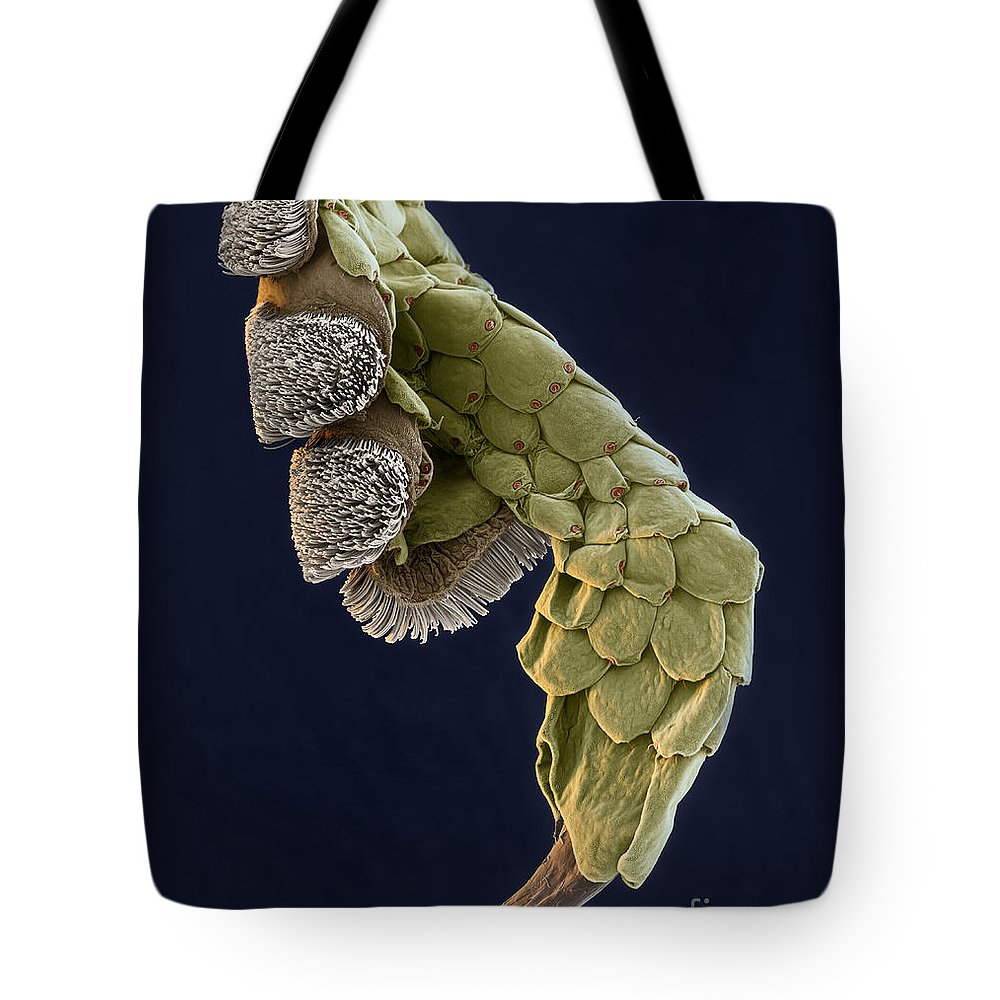 Animal Tote Bag featuring the photograph Gecko Foot Sem by Eye of Science
