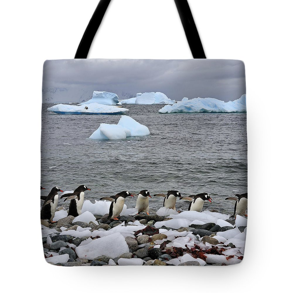 Gentoo Penguin Tote Bag featuring the photograph Gentoo Parade by Tony Beck