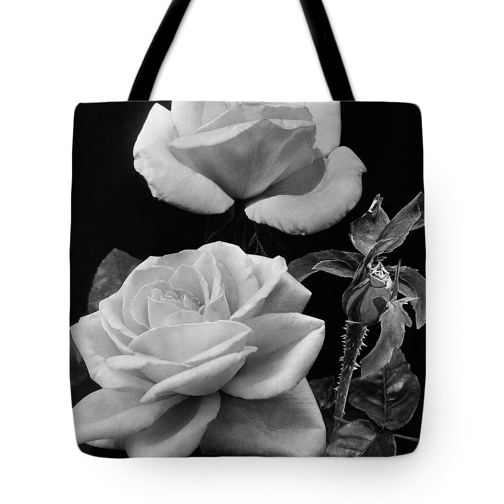 Flowers Tote Bag featuring the photograph 'george Arends' Roses by J. Horace McFarland