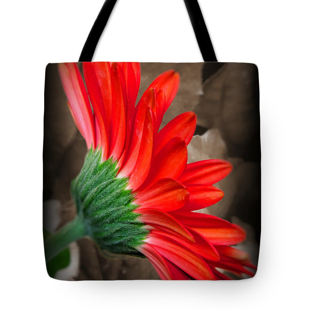 Bashful Red Tote Bag featuring the photograph Gerber Daisy Bashful Red by Ella Kaye Dickey