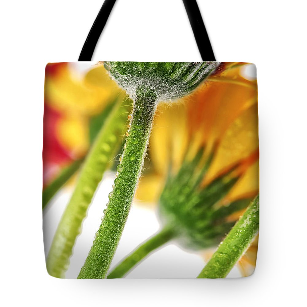 Flower Tote Bag featuring the photograph Gerbera Flowers by Elena Elisseeva