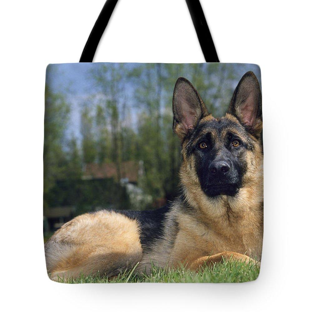 German Shepherd Tote Bag featuring the photograph German Shepherd Dog by Johan De Meester