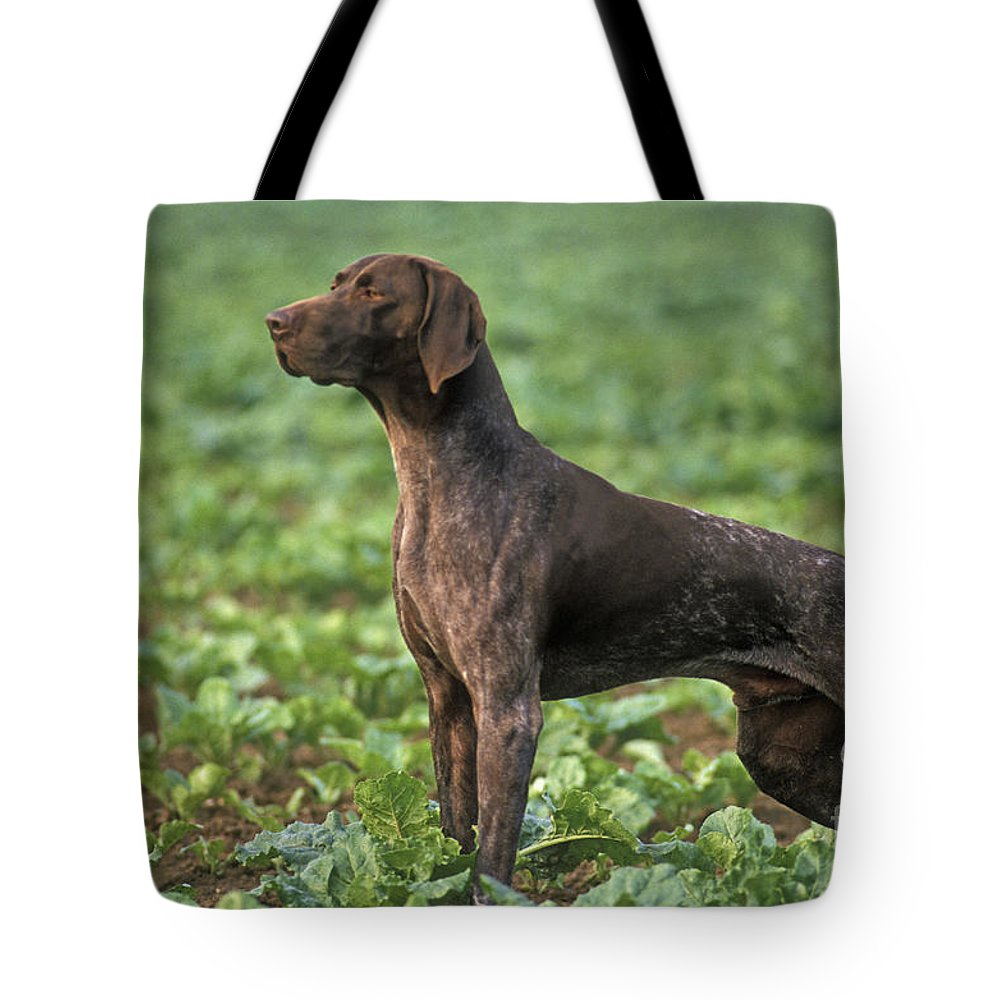 German Short-haired Pointer Tote Bag featuring the photograph German Short-haired Pointer by Jean-Michel Labat