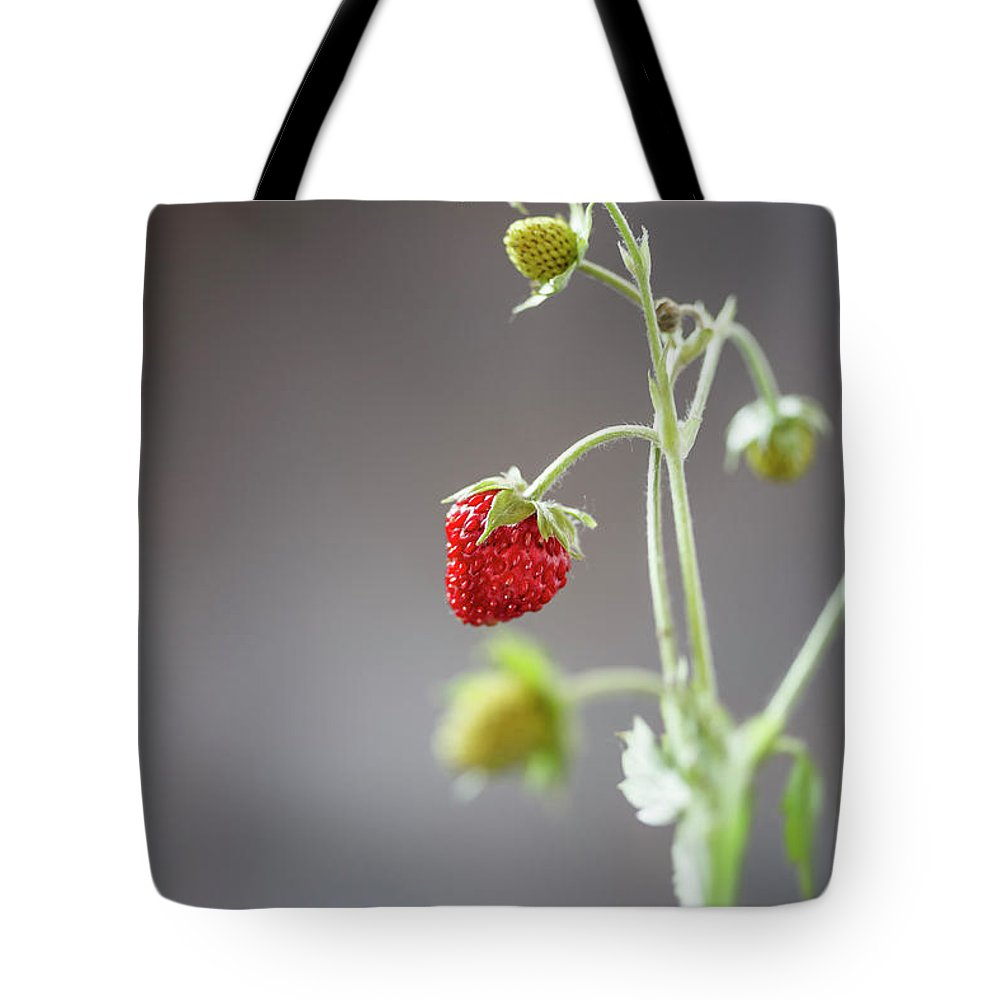 Wild Strawberry Tote Bag featuring the photograph Germany, Baden Wuerttemberg, Wild by Westend61