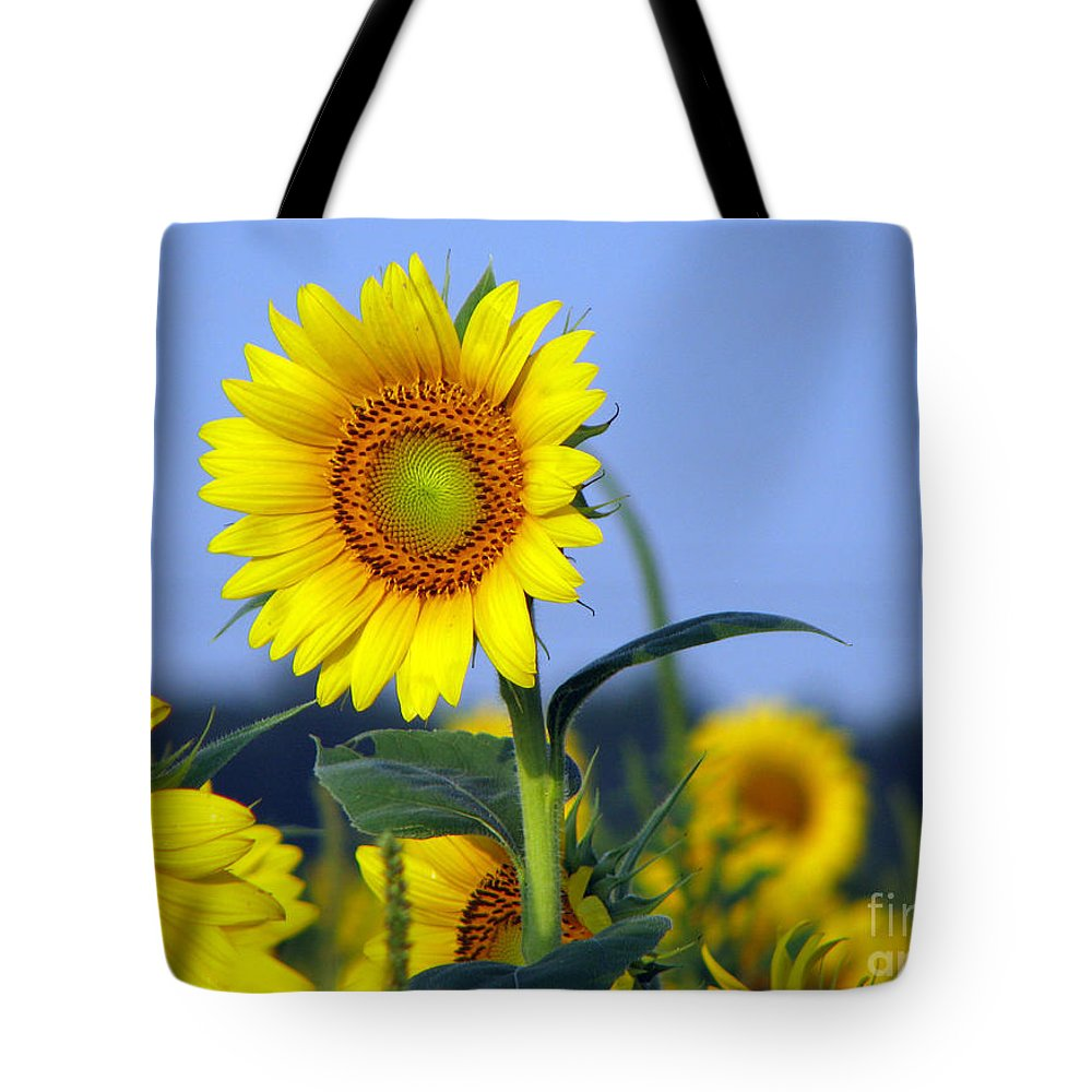 Sunflower Tote Bag featuring the photograph Getting To The Sun by Amanda Barcon