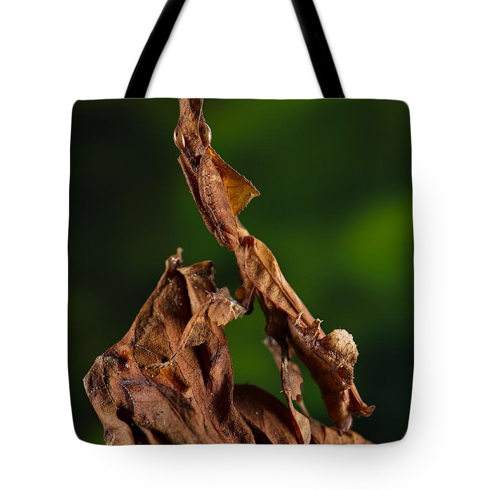 Mantis Tote Bag featuring the photograph Ghost Or Dead Leaf Mantis by Francesco Tomasinelli