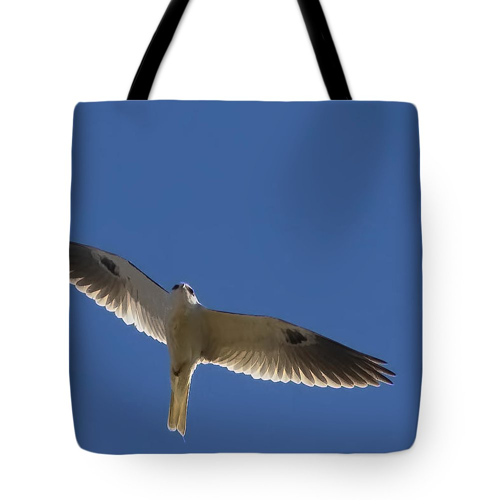 White-tailed Kite Tote Bag featuring the photograph Ghostly Flight by Gary Holmes