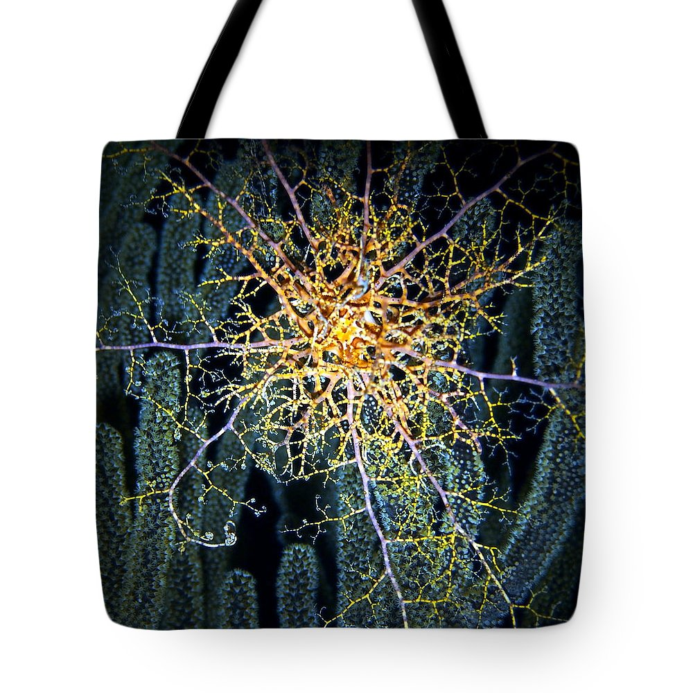 Ocean Tote Bag featuring the photograph Giant Basket Star At Night by Amy McDaniel