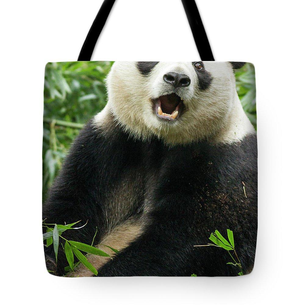Panda Tote Bag featuring the photograph Giant Panda, Chengdu, China by Paul Souders