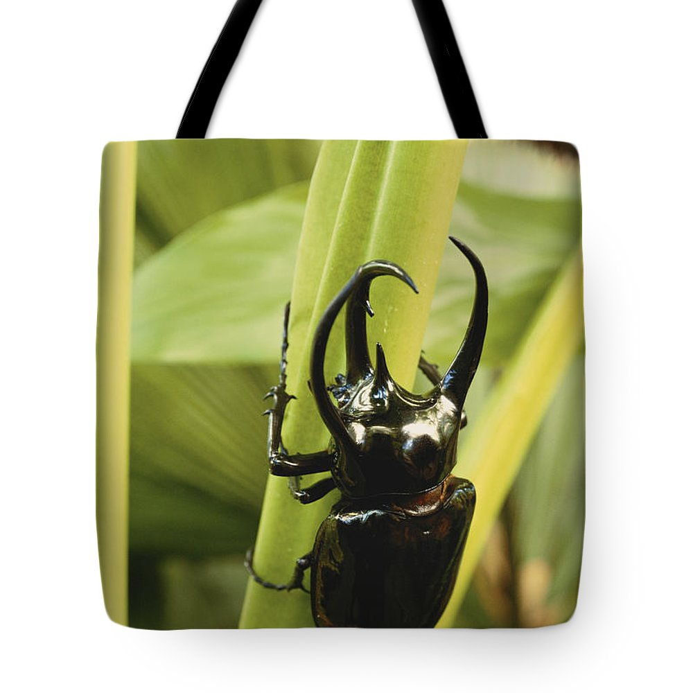 Giant Three-horned Beetle Tote Bag featuring the photograph Giant Three-horned Beetle by Art Wolfe