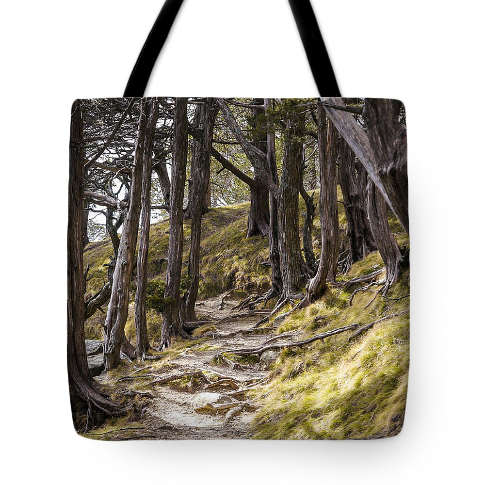 Tree Tote Bag featuring the photograph Gibraltar Rock Trail Wisconsin by Steven Ralser