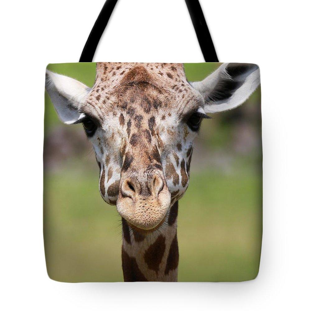 Giraffe Peek A Boo Poster Tote Bag featuring the photograph Giraffe Peek A Boo Poster by Dan Sproul