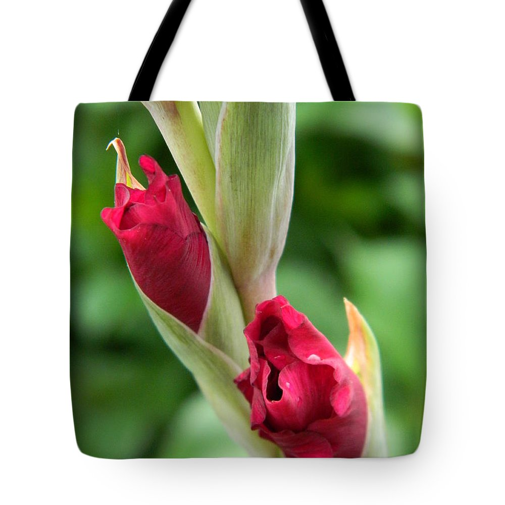 Gladiola Tote Bag featuring the photograph Gladiola Buds by Terri Waselchuk