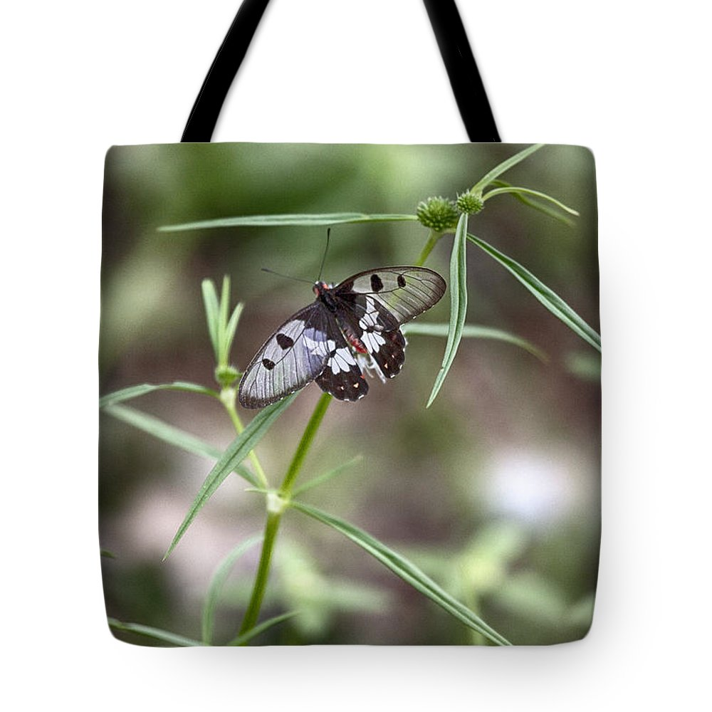 Glass-wing Butterfly Tote Bag featuring the photograph Glass-wing Butterfly by Douglas Barnard