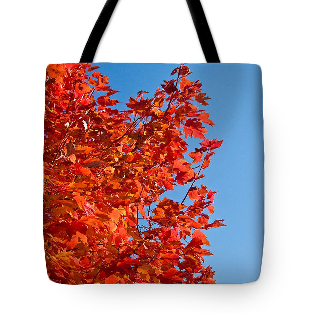 Glowing Tote Bag featuring the photograph Glowing Fall Maple Colors 1 by Douglas Barnett
