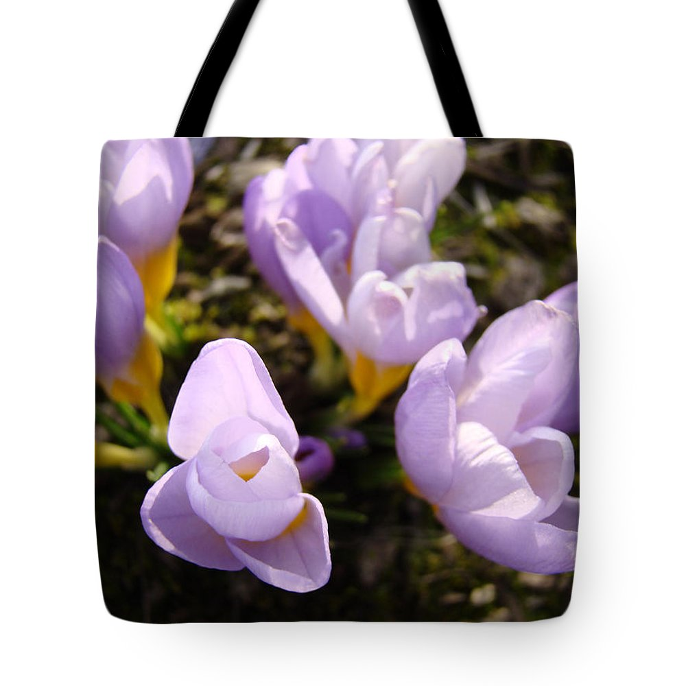 Glow Tote Bag featuring the photograph Glowing Floral Art Prints Crocus Flowers by Baslee Troutman
