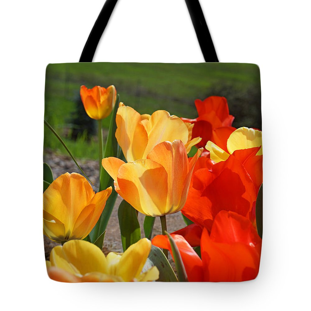 Red Tote Bag featuring the photograph Glowing Sunlit Tulips Art Prints Red Yellow Orange by Baslee Troutman
