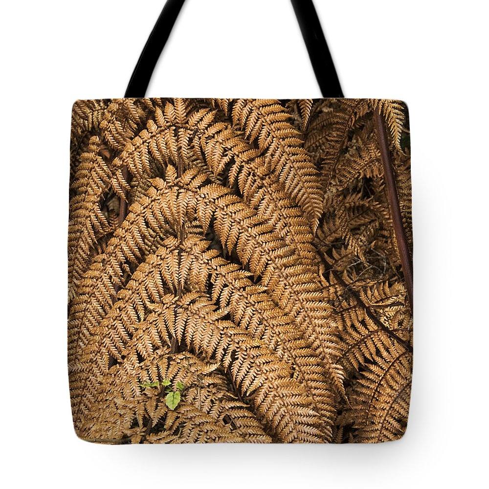 Lake Te Anau New Zealand Fern Ferns Plant Plants Rainforests Gold Leaf Leaves Branch Branches Rainforest Tote Bag featuring the photograph Goden Fern Branch by Bob Phillips