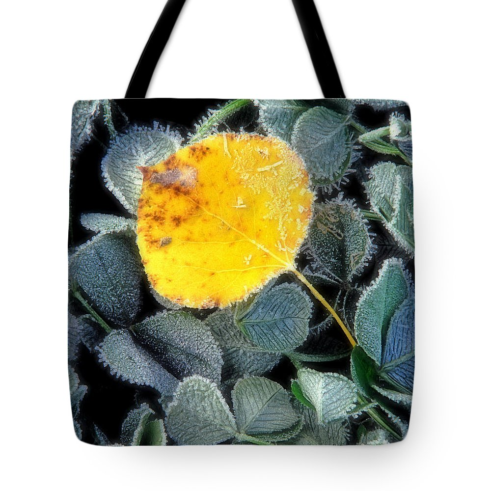First Frost Tote Bag featuring the photograph Gold On Green by Bill Morgenstern