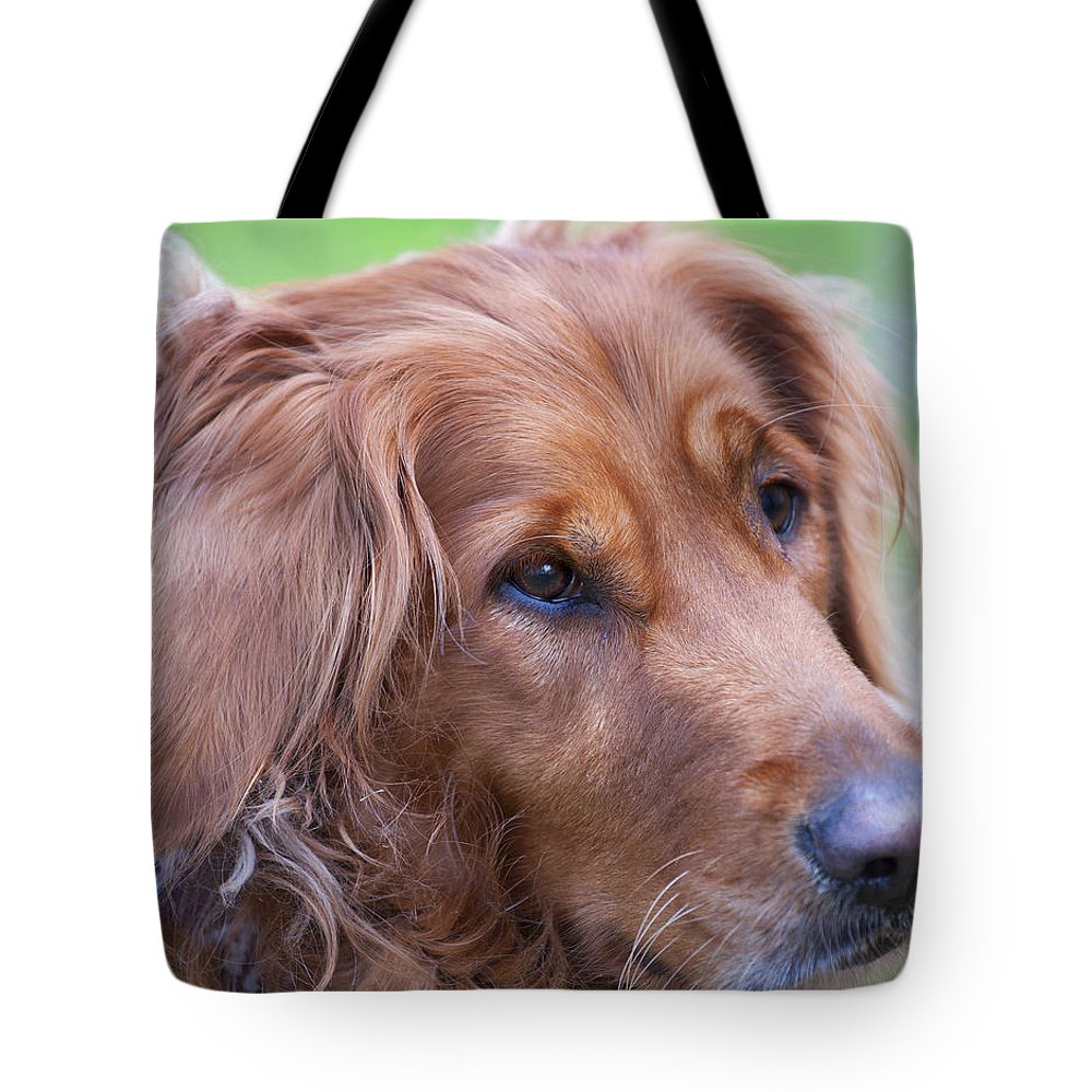 Animals Tote Bag featuring the photograph Golden Girl by Stephen Anderson