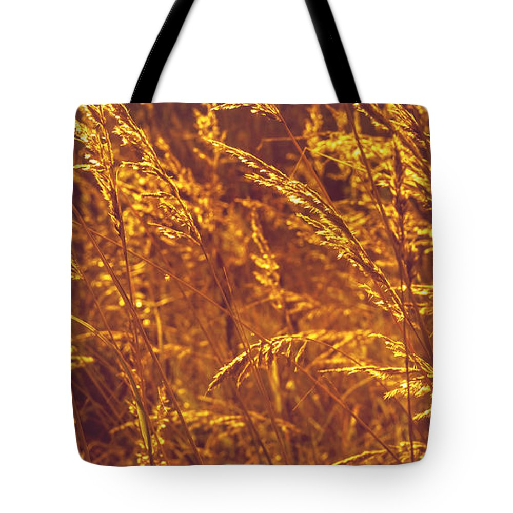Grass.nature Tote Bag featuring the photograph Golden Grass by Jenny Rainbow