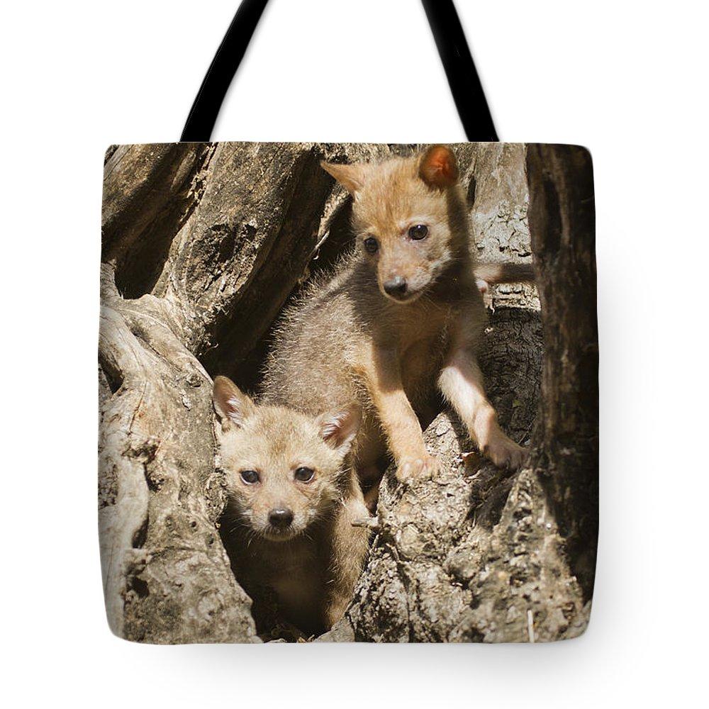 Golden Jackal Tote Bag featuring the photograph Golden Jackal Canis Aureus Cubs by Eyal Bartov
