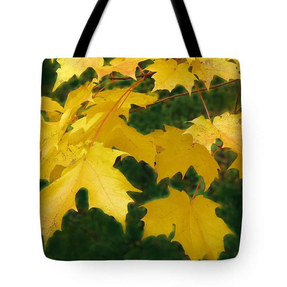 Fall Tote Bag featuring the photograph Golden Leaves Floating by Ian MacDonald