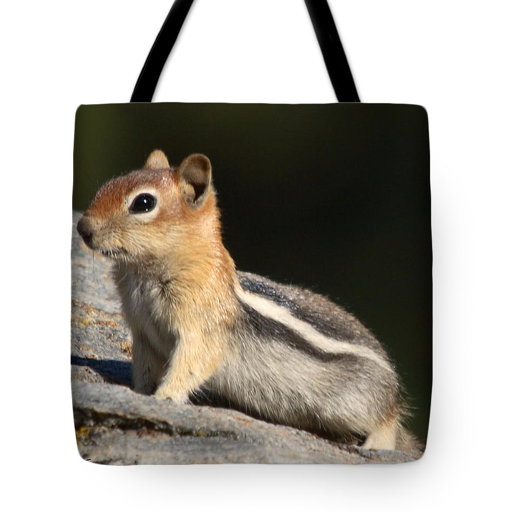 Nature Tote Bag featuring the photograph Golden-mantled Ground Squirrel by David Salter