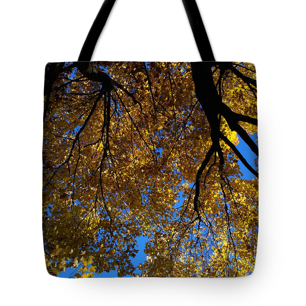 Golden Maple Tote Bag featuring the photograph Golden Maple 8 by Linda Shafer
