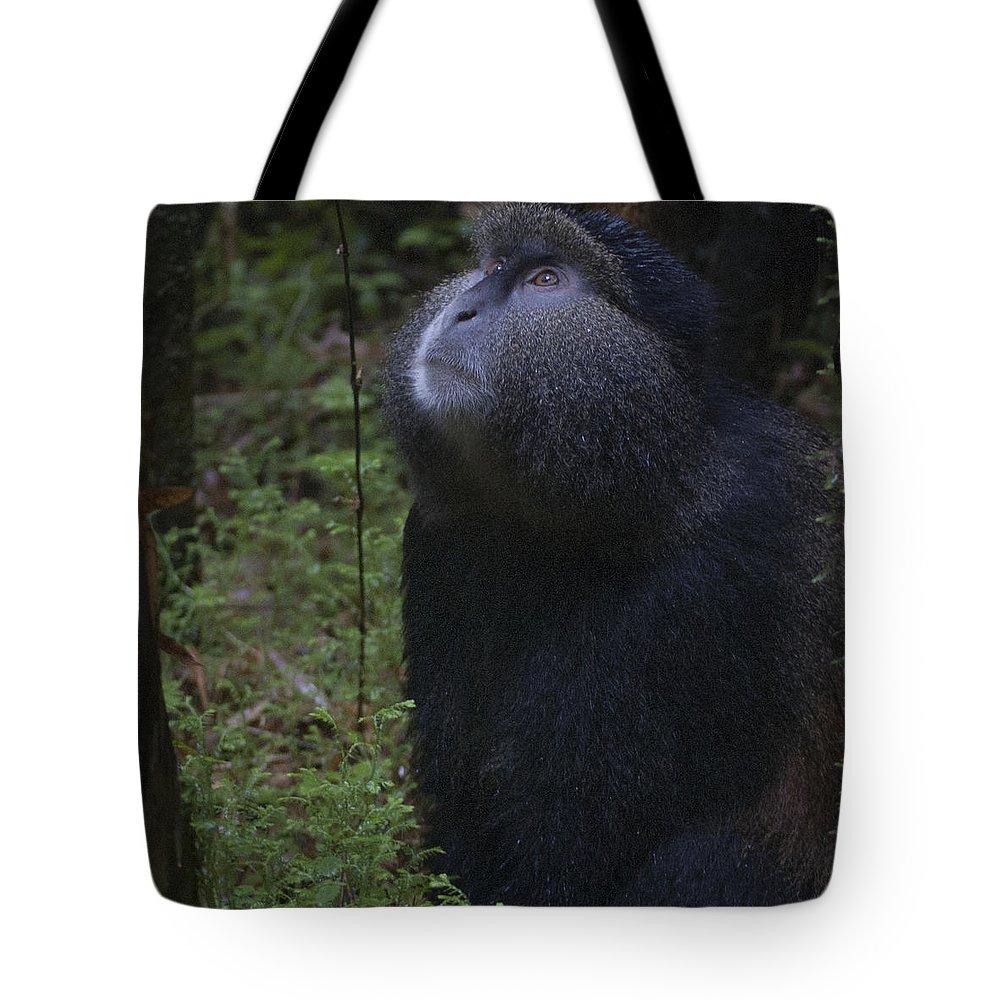 Rwanda Tote Bag featuring the photograph Golden Monkey by Paul Weaver