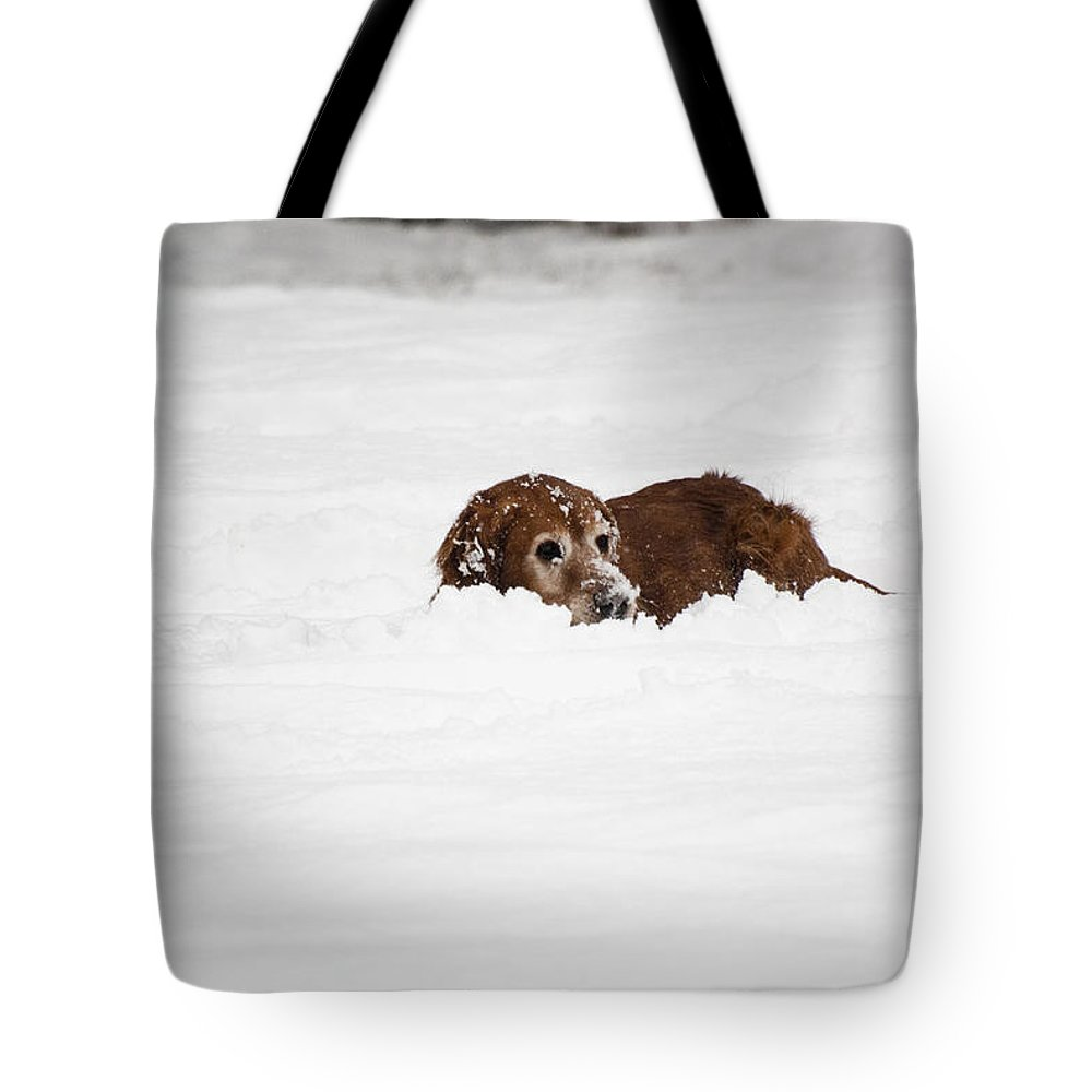 Dog Tote Bag featuring the photograph Golden Retreiver Playing In The Snow by Helix Games Photography