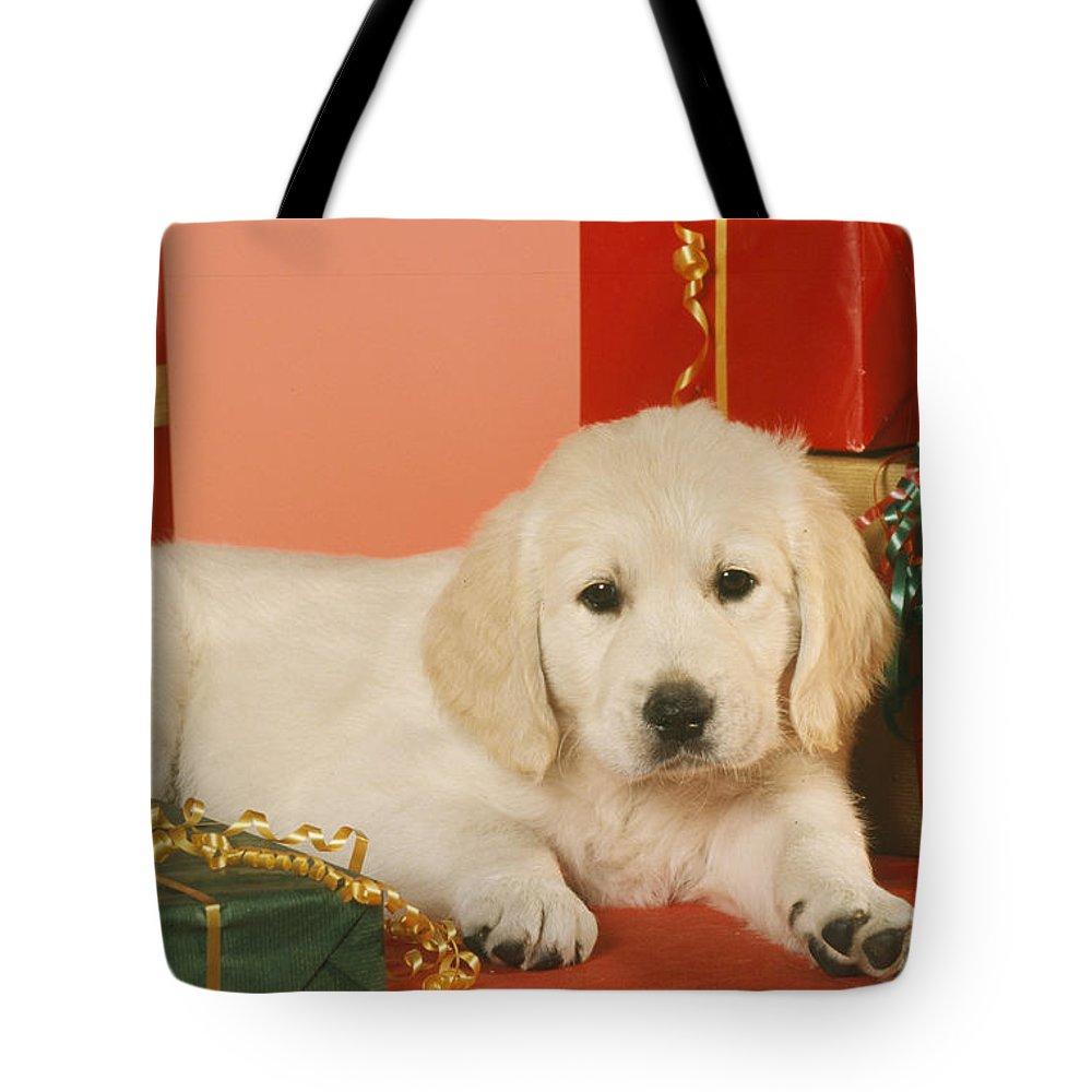 Golden Retriever Tote Bag featuring the photograph Golden Retriever Amongst Presents by Johan De Meester