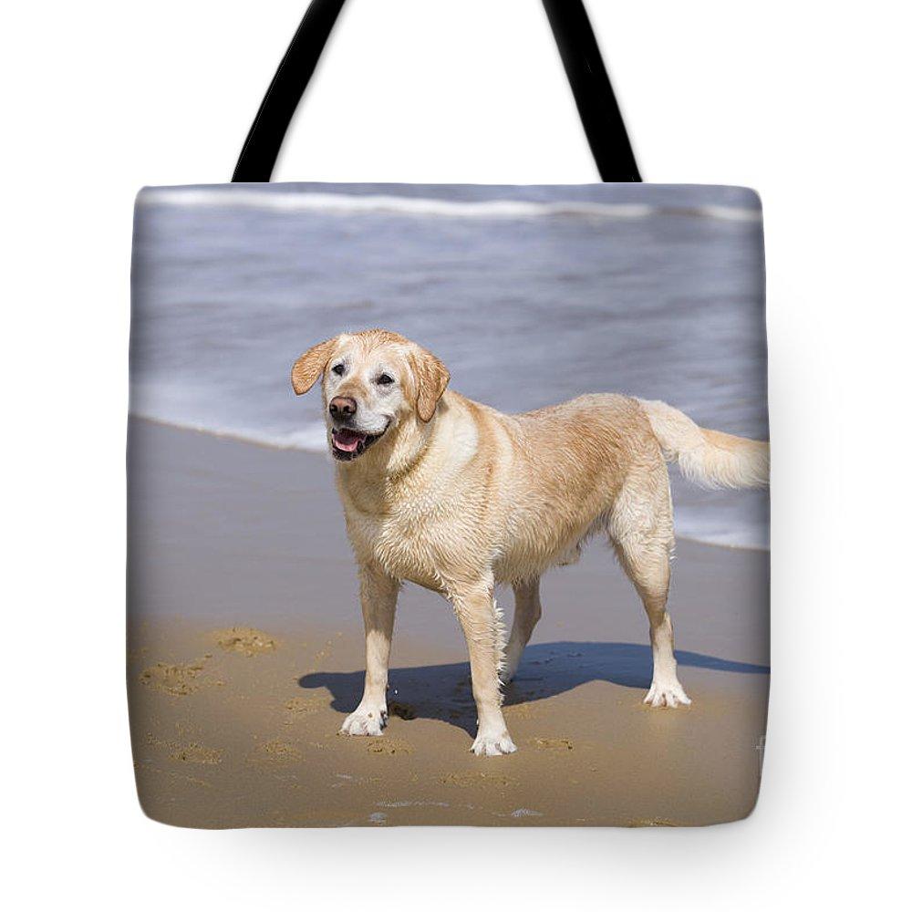 Golden Retriever Tote Bag featuring the photograph Golden Retriever On Beach by Geoff du Feu