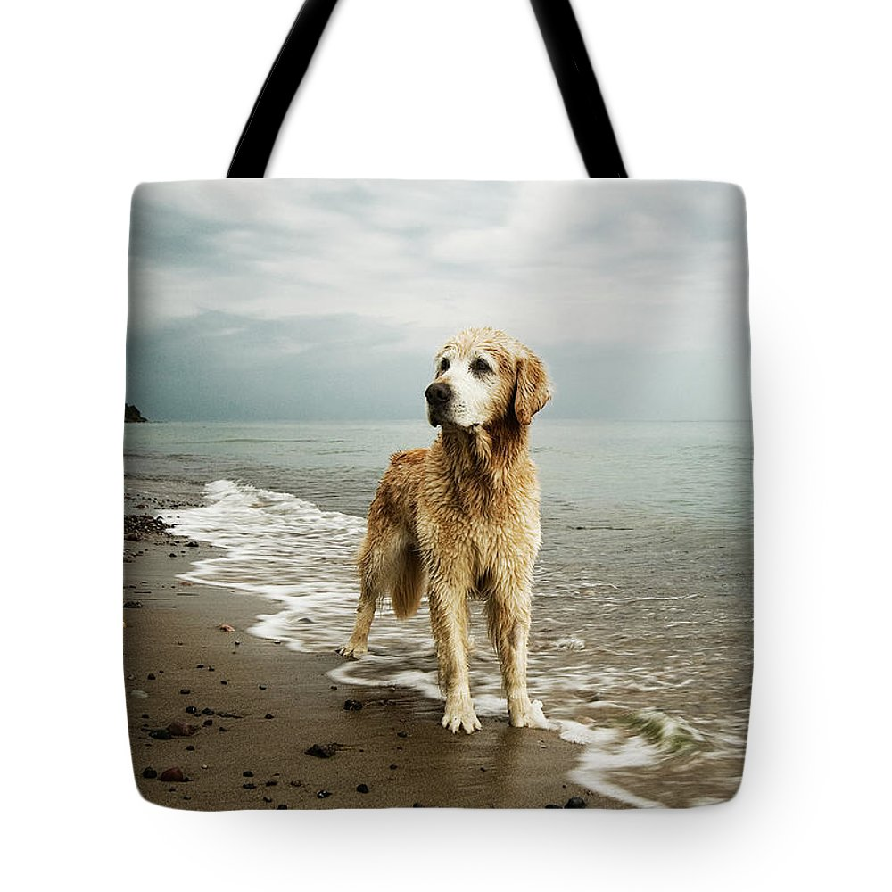 Pets Tote Bag featuring the photograph Golden Retriever On Beach by Jutta Bauer