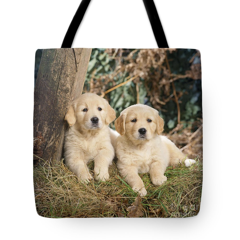 Golden Retriever Tote Bag featuring the photograph Golden Retriever Puppies In The Woods by John Daniels