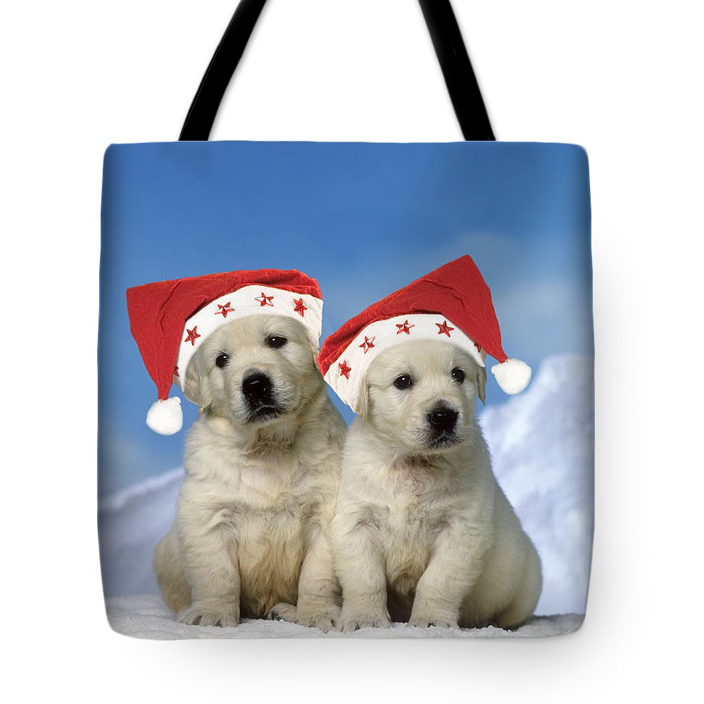 Golden Retriever Tote Bag featuring the photograph Golden Retriever Puppies by Jean-Michel Labat