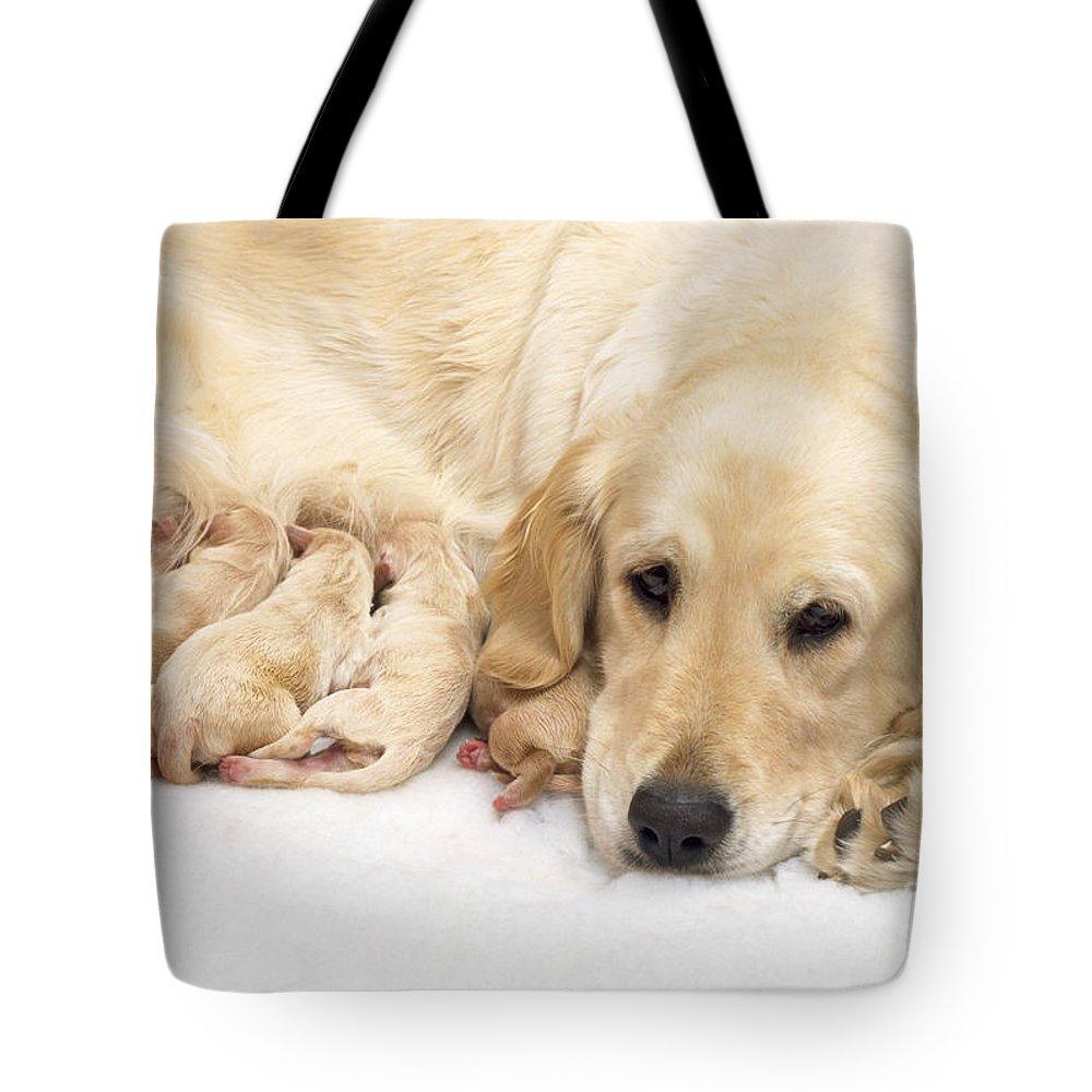 Golden Retriever Tote Bag featuring the photograph Golden Retriever Puppies Suckling by John Daniels