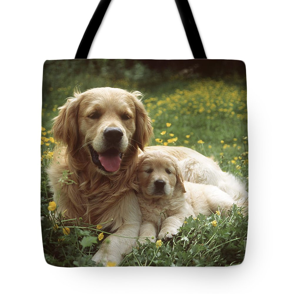 Golden Retriever Tote Bag featuring the photograph Golden Retrievers Dog And Puppy by John Daniels