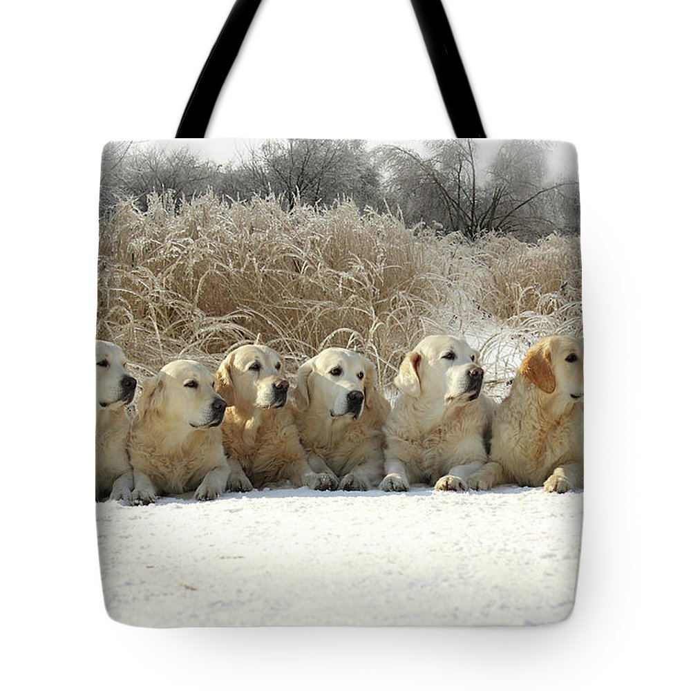 Pets Tote Bag featuring the photograph Golden Retrievers by Sergey Ryumin