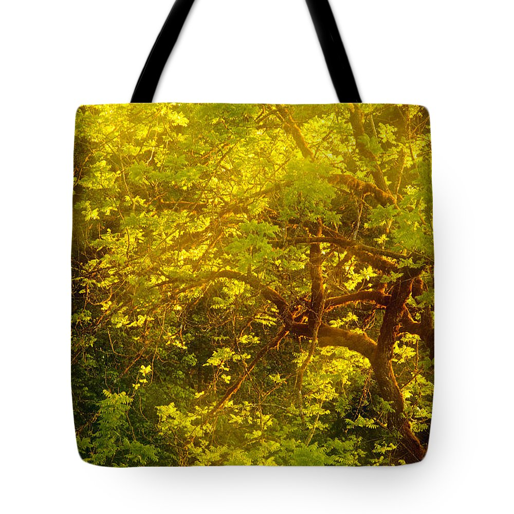 Tree Tote Bag featuring the photograph Golden Spring by Bobbie Climer