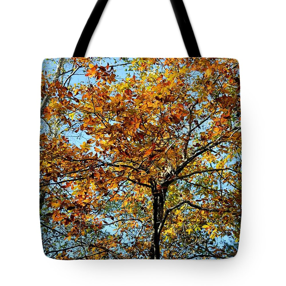 Golden Tree Lined Sky Tote Bag featuring the photograph Golden Tree Lined Sky by Maria Urso