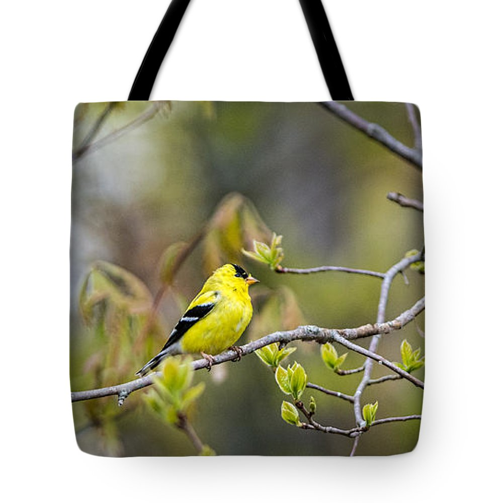 Goldfinch Tote Bag featuring the photograph Goldfinch In Spring by David Kay