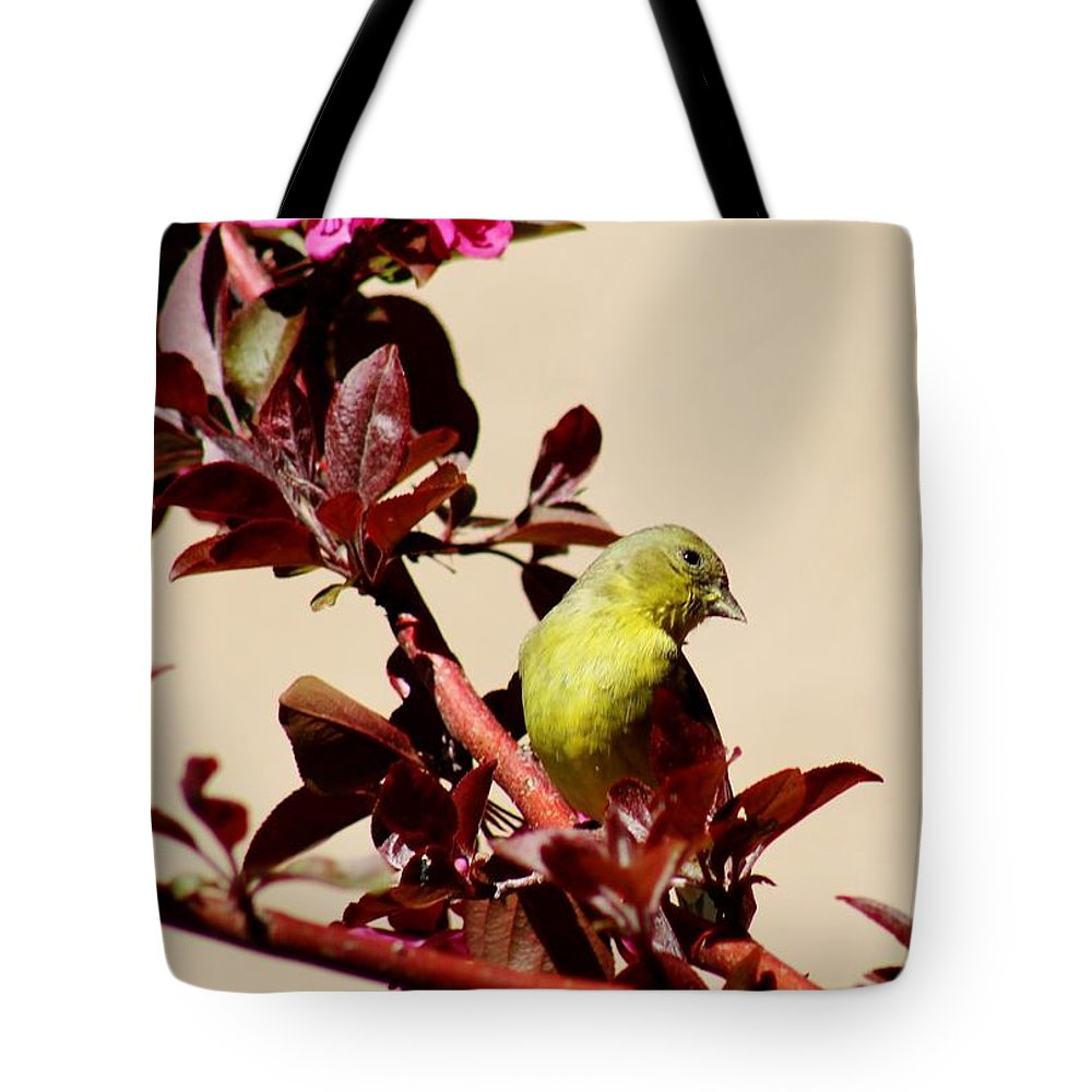 Wildlife Tote Bag featuring the photograph Goldfinch In Tree 031015a by Edward Dobosh
