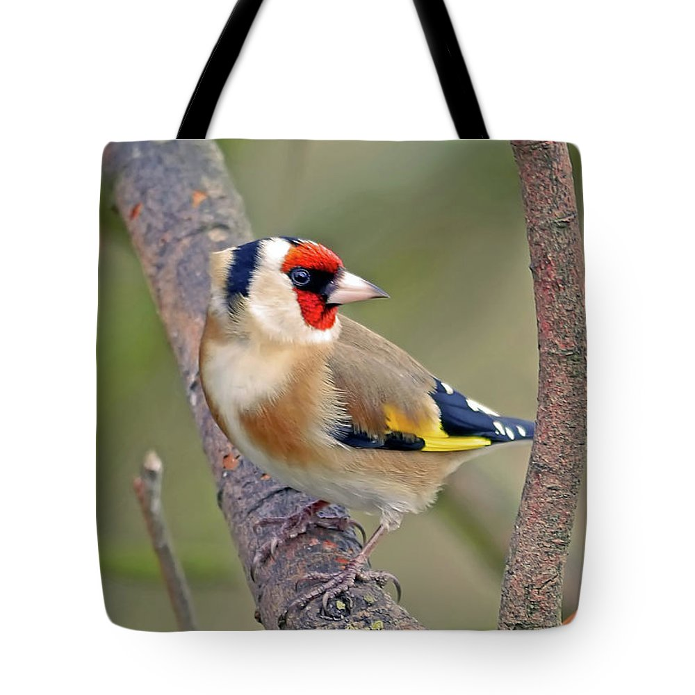 Animal Themes Tote Bag featuring the photograph Goldfinch by Kevspix