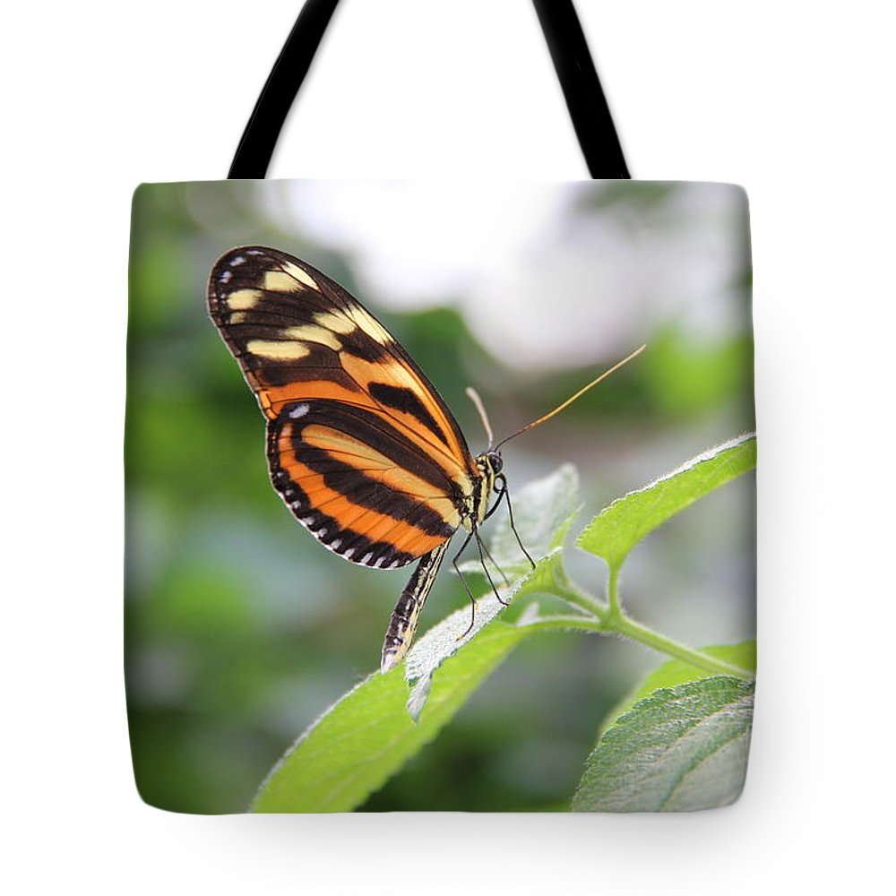 Nature Tote Bag featuring the photograph Good Morning Butterfly by Jackie Mestrom