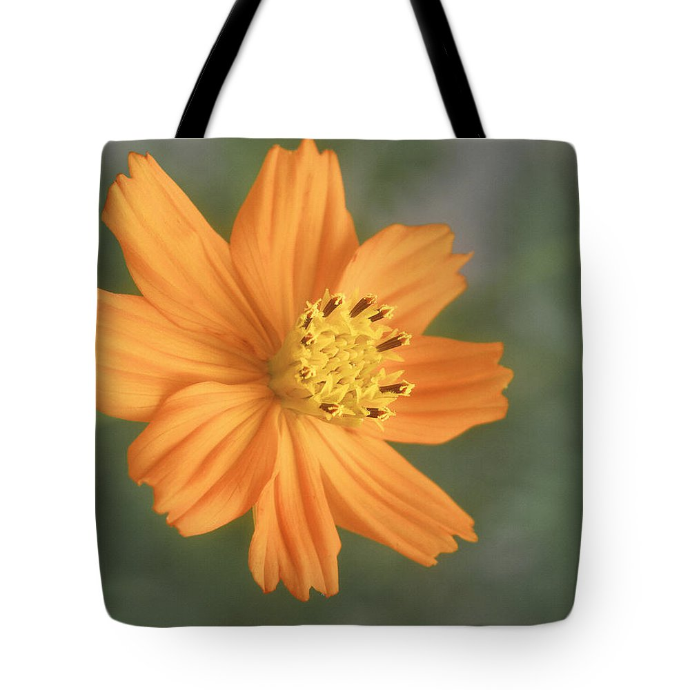 Bloom Tote Bag featuring the photograph Good Morning Sunshine by David and Carol Kelly