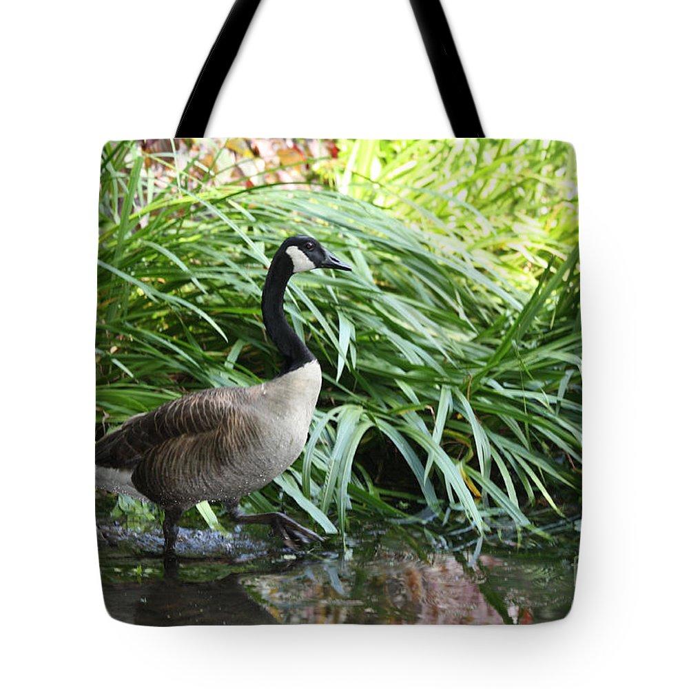Goose Walking Back In For A Swim Tote Bag featuring the photograph Goose Walking Back In For A Swim by John Telfer