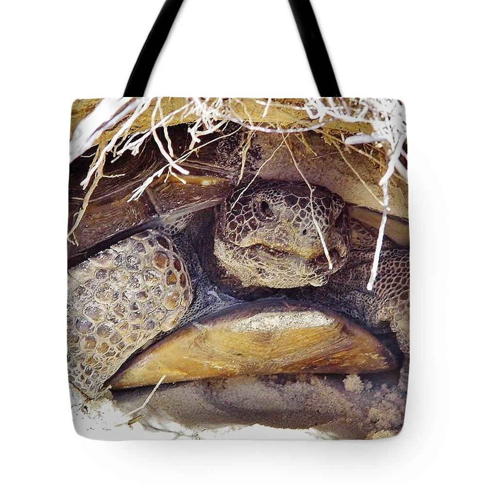 Gopher Turtle Tote Bag featuring the photograph Gopher Tortoise by D Hackett