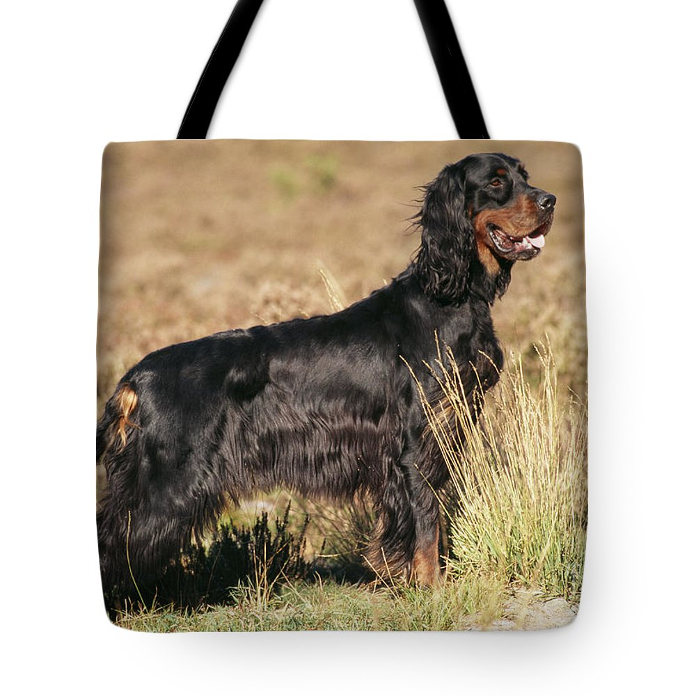 Gordon Setter Tote Bag featuring the photograph Gordon Setter Dog by John Daniels