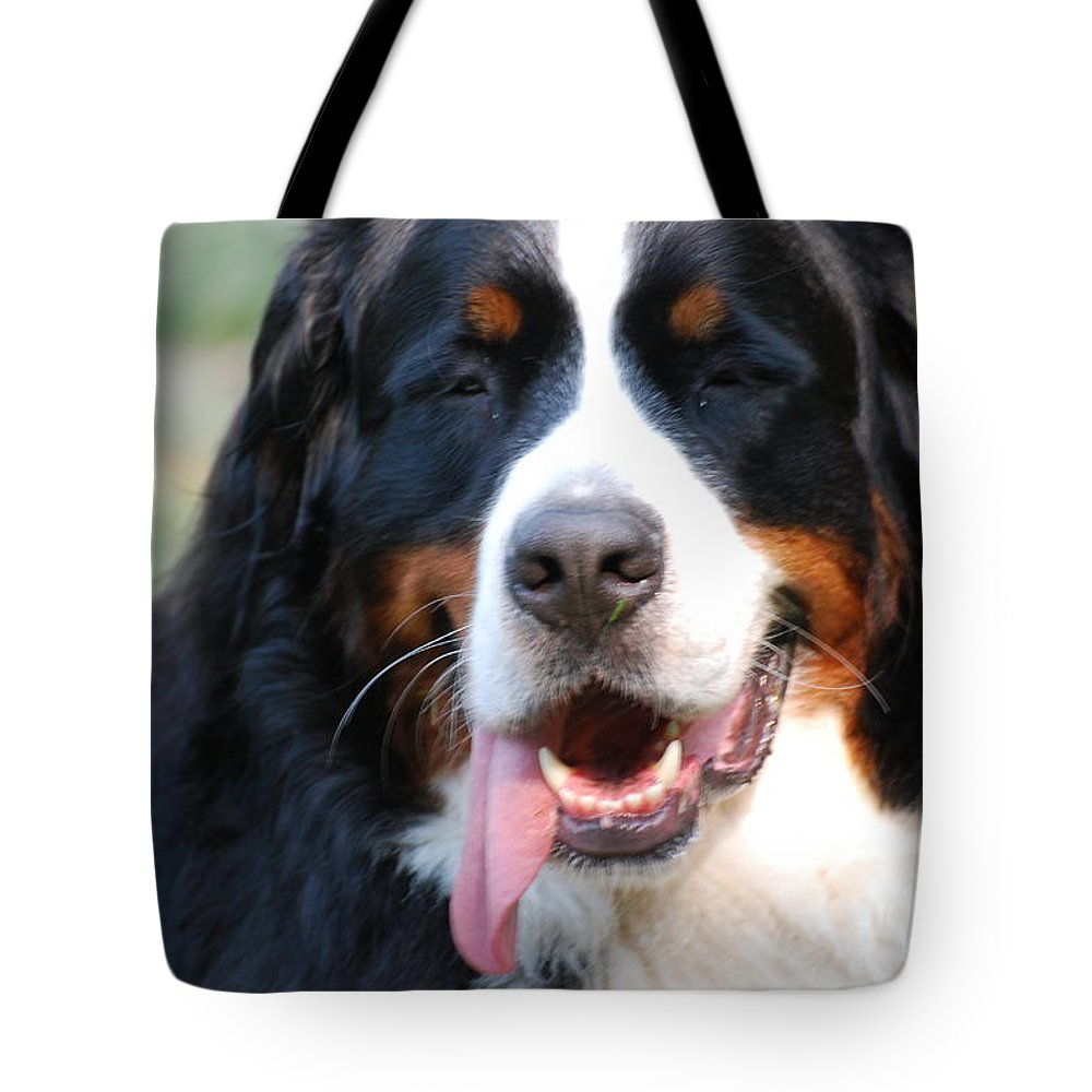 Bernese Tote Bag featuring the photograph Gorgeous Bernese Mountain Dog by DejaVu Designs